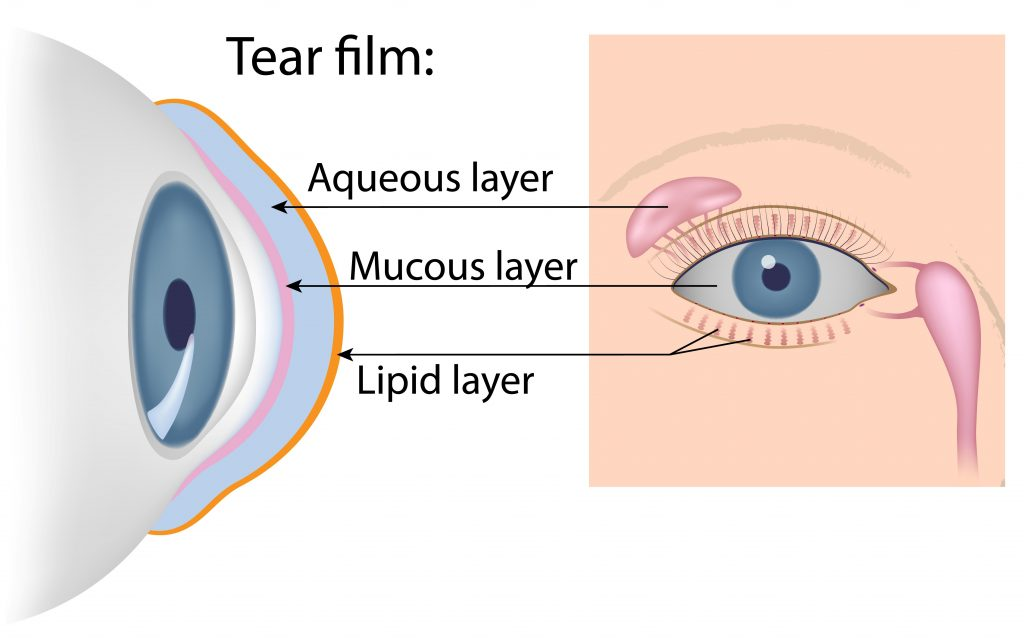 Dry eye tear film.